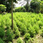 Artemisia Farm